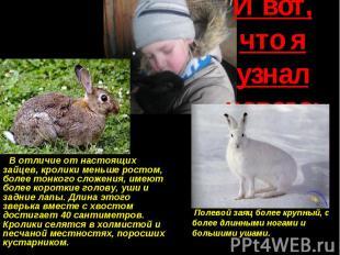 И вот, что я узнал нового: В отличие от настоящих зайцев, кролики меньше ростом,