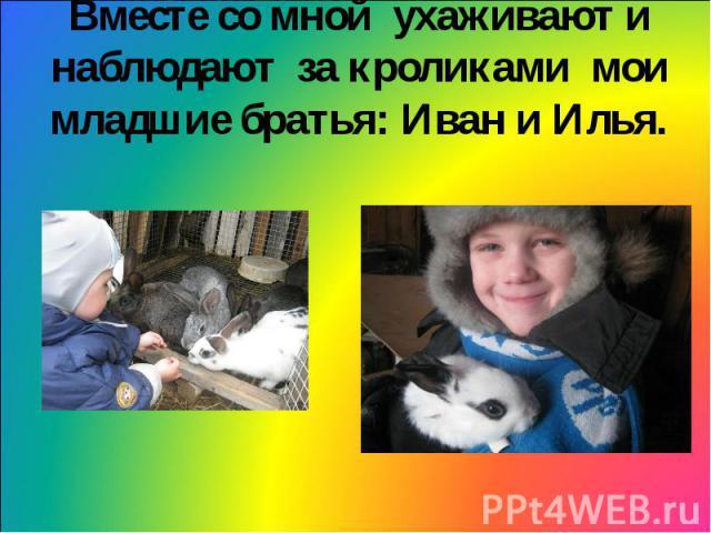 Вместе со мной ухаживают и наблюдают за кроликами мои младшие братья: Иван и Илья.