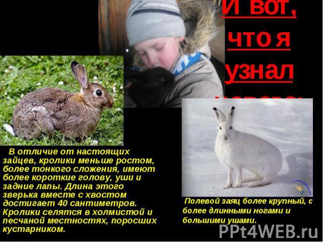 И вот, что я узнал нового: В отличие от настоящих зайцев, кролики меньше ростом, более тонкого сложения, имеют более короткие голову, уши и задние лапы. Длина этого зверька вместе с хвостом достигает 40 сантиметров. Кролики селятся в холмистой и пес…