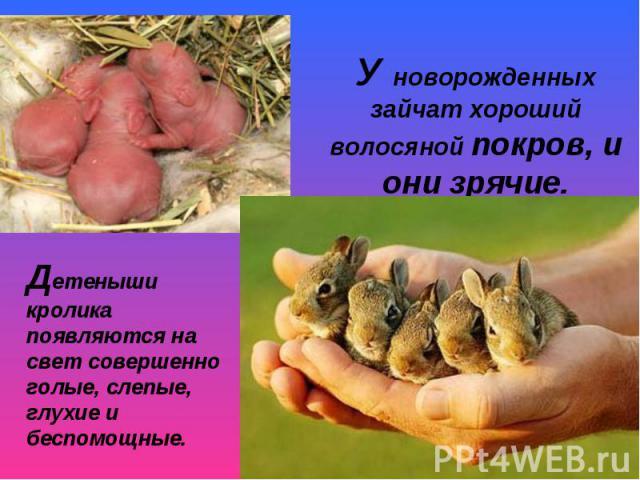 У новорожденных зайчат хороший волосяной покров, и они зрячие. Детеныши кролика появляются на свет совершенно голые, слепые, глухие и беспомощные.