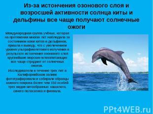Из-за истончения озонового слоя и возросшей активности солнца киты и дельфины вс