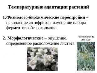 Температурные адаптации растений Физиолого-биохимические перестройки – накоплени