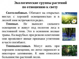 Экологические группы растений по отношению к свету Светолюбивые. Обитают на откр