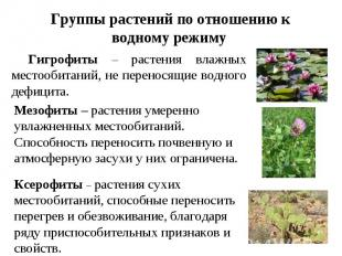 Группы растений по отношению к водному режиму Гигрофиты – растения влажных место