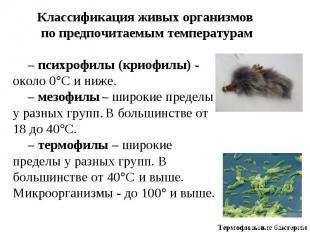 Классификация живых организмов по предпочитаемым температурам – психрофилы (крио