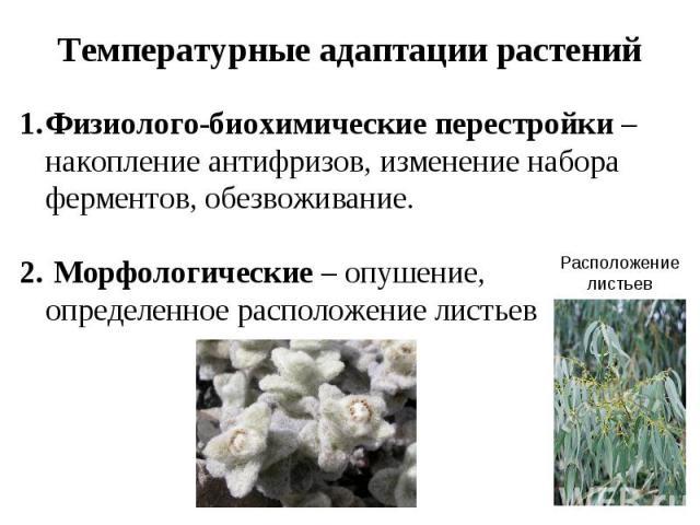 Температурные адаптации растений Физиолого-биохимические перестройки – накопление антифризов, изменение набора ферментов, обезвоживание. Морфологические – опушение, определенное расположение листьев