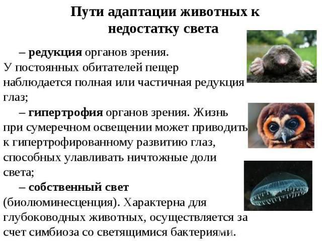 Пути адаптации животных к недостатку света –редукция органов зрения. У постоянных обитателей пещер наблюдается полная или частичная редукция глаз;–гипертрофия органов зрения. Жизнь при сумеречном освещении может приводить к гипертрофированному раз…