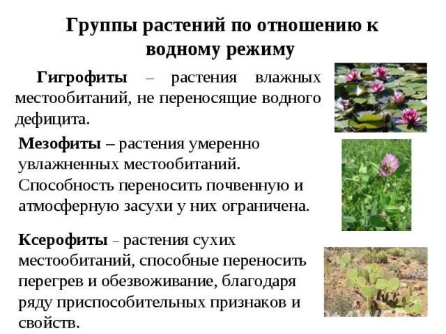 Группы растений по отношению к водному режиму Гигрофиты – растения влажных местообитаний, не переносящие водного дефицита. Мезофиты – растения умеренно увлажненных местообитаний. Способность переносить почвенную и атмосферную засухи у них ограничена…