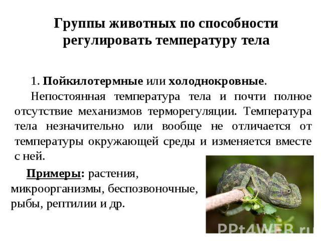 Группы животных по способности регулировать температуру тела 1.Пойкилотермные или холоднокровные. Непостоянная температура тела и почти полное отсутствие механизмов терморегуляции. Температура тела незначительно или вообще не отличается от температ…
