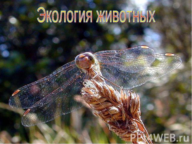 Экология животных