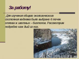 За работу! Для изучения общего экологического состояния водоема было выбрано 6 т