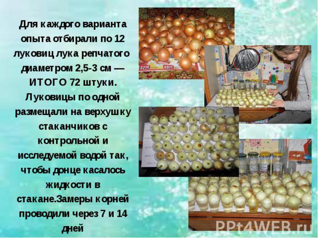 Для каждого варианта опыта отбирали по 12 луковиц лука репчатого диаметром 2,5-3 см — ИТОГО 72 штуки. Луковицы по одной размещали на верхушку стаканчиков с контрольной и исследуемой водой так, чтобы донце касалось жидкости в стакане.Замеры корней пр…