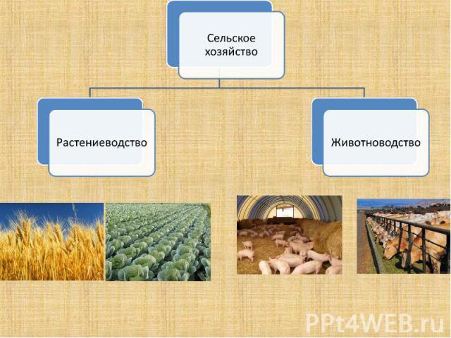 Сельское хозяйствоРастениеводствоЖивотноводство