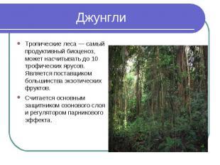 Тропические леса — самый продуктивный биоценоз, может насчитывать до 10 трофичес