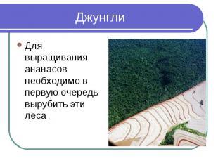 ДжунглиДля выращивания ананасов необходимо в первую очередь вырубить эти леса