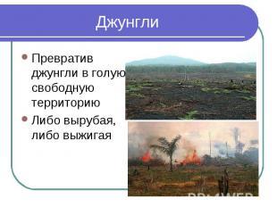 ДжунглиПревратив джунгли в голую, свободную территориюЛибо вырубая, либо выжигая