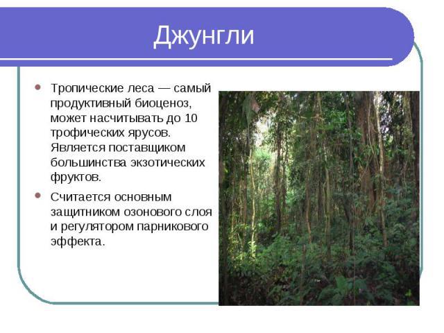 Тропические леса — самый продуктивный биоценоз, может насчитывать до 10 трофических ярусов. Является поставщиком большинства экзотических фруктов.Считается основным защитником озонового слоя и регулятором парникового эффекта.