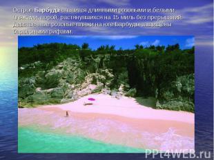 Остров Барбуда славится длинными розовыми и белыми пляжами, порой, растянувшихся