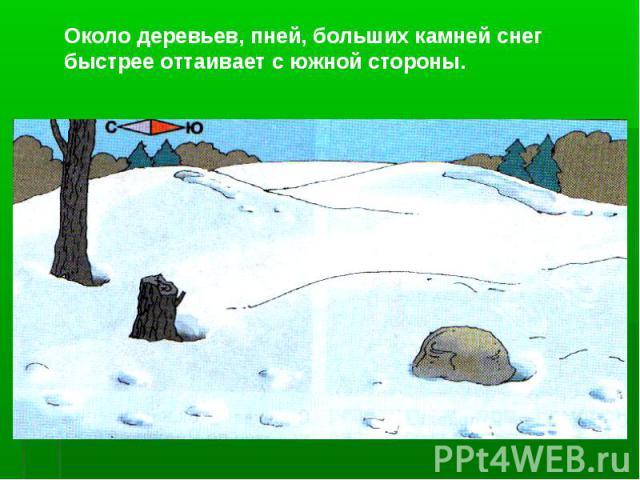Около деревьев, пней, больших камней снег быстрее оттаивает с южной стороны.