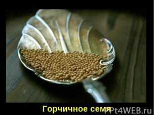 Горчичное семя