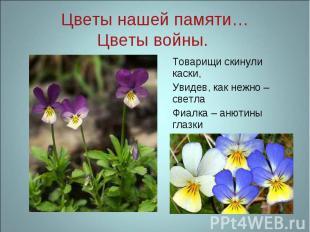 Цветы нашей памяти…Цветы войны. Товарищи скинули каски, Увидев, как нежно – свет
