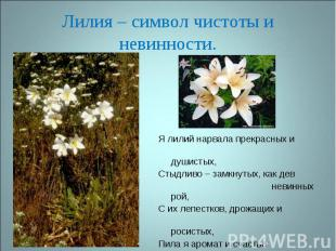Лилия – символ чистоты и невинности. Я лилий нарвала прекрасных и душистых,Стыдл