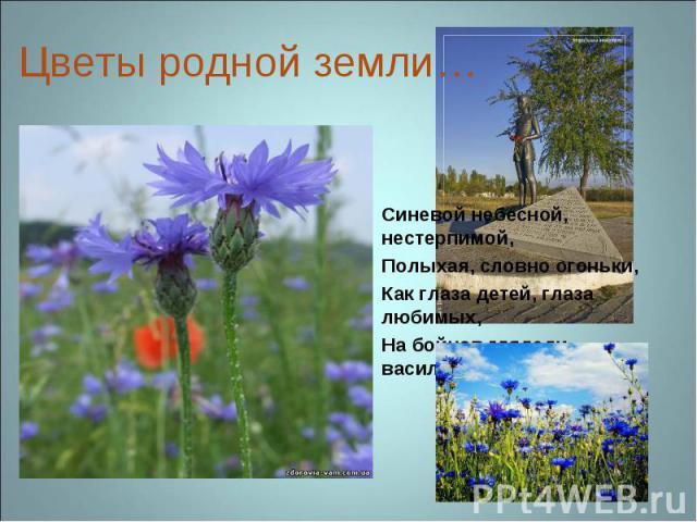 Цветы родной земли… Синевой небесной, нестерпимой,Полыхая, словно огоньки,Как глаза детей, глаза любимых, На бойцов глядели васильки… Б. Кежун
