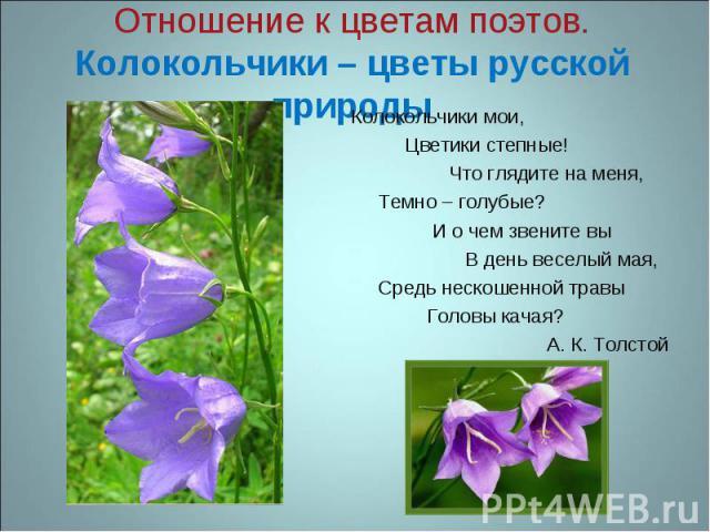 Отношение к цветам поэтов.Колокольчики – цветы русской природы Колокольчики мои, Цветики степные! Что глядите на меня, Темно – голубые? И о чем звените вы В день веселый мая, Средь нескошенной травы Головы качая? А. К. Толстой