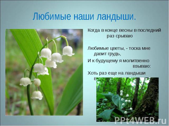Любимые наши ландыши. Когда в конце весны в последний раз срываю Любимые цветы, - тоска мне давит грудь,И к будущему я молитвенно взываю:Хоть раз еще на ландыши взглянуть. В. Брюсов