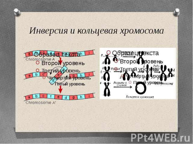 Инверсия и кольцевая хромосома
