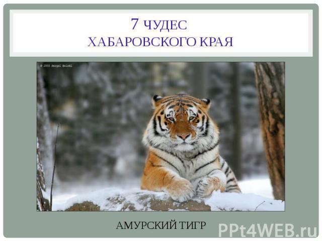 7 ЧУДЕС ХАБАРОВСКОГО КРАЯАМУРСКИЙ ТИГР