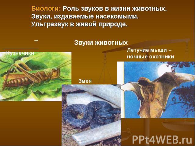 Биологи: Роль звуков в жизни животных.Звуки, издаваемые насекомыми. Ультразвук в живой природе. Кузнечики Звуки животных Летучие мыши – ночные охотники Змея