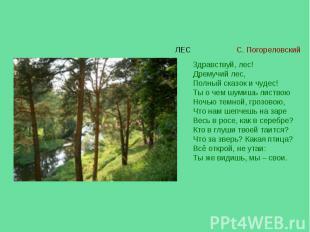 Здравствуй, лес! Дремучий лес, Полный сказок и чудес! Ты о чем шумишь листвою Но