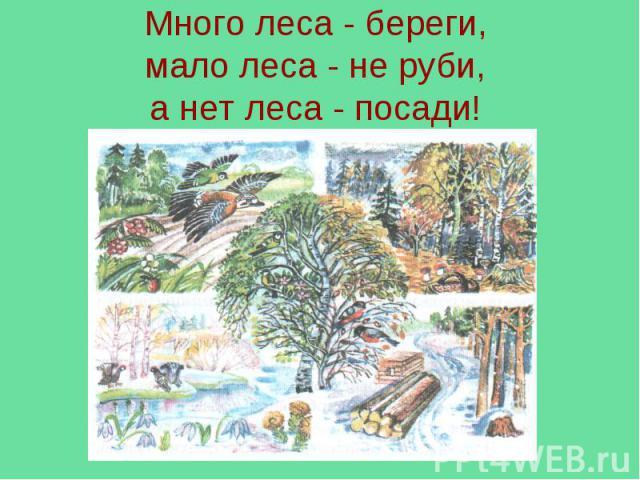 Много леса - береги,мало леса - не руби,а нет леса - посади!