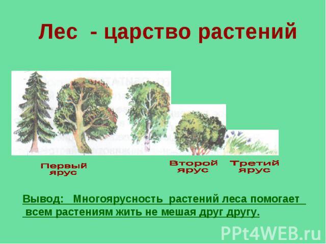 Лес - царство растений Вывод: Многоярусность растений леса помогает всем растениям жить не мешая друг другу.