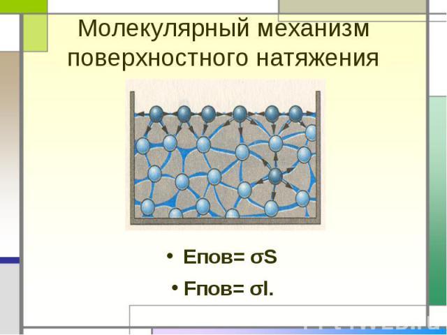 Молекулярный механизм поверхностного натяженияЕпов= σS