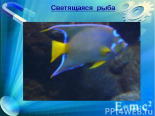 Светящаяся рыба