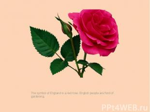 The symbol of England is a red rose. English people are fond of gardening.