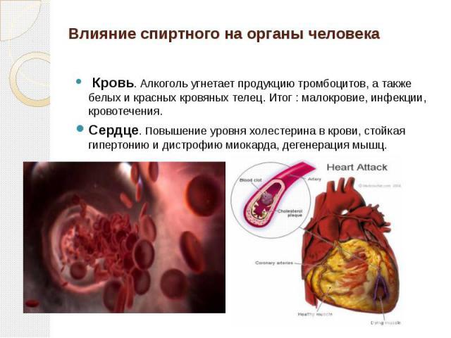 Влияние спиртного на органы человека Кровь. Алкоголь угнетает продукцию тромбоцитов, а также белых и красных кровяных телец. Итог : малокровие, инфекции, кровотечения.Сердце. Повышение уровня холестерина в крови, стойкая гипертонию и дистрофию миока…