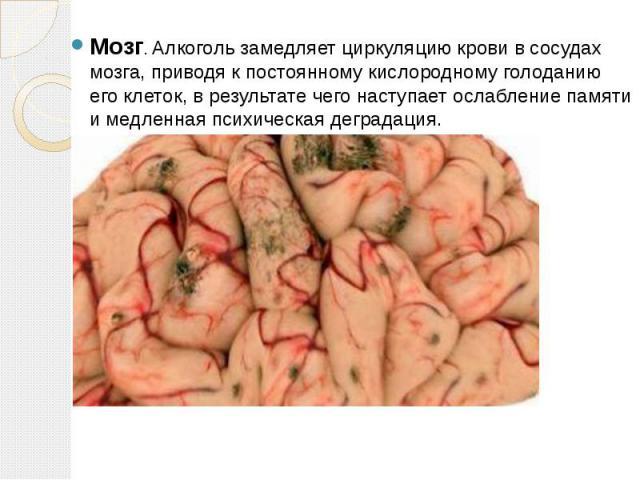 Мозг. Алкоголь замедляет циркуляцию крови в сосудах мозга, приводя к постоянному кислородному голоданию его клеток, в результате чего наступает ослабление памяти и медленная психическая деградация.