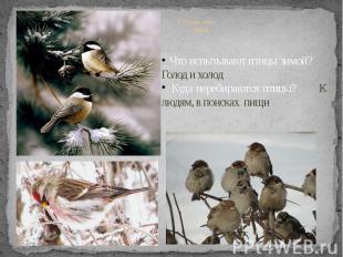 2. Жизнь птиц зимой Что испытывают птицы зимой? Голод и холод Куда перебираются