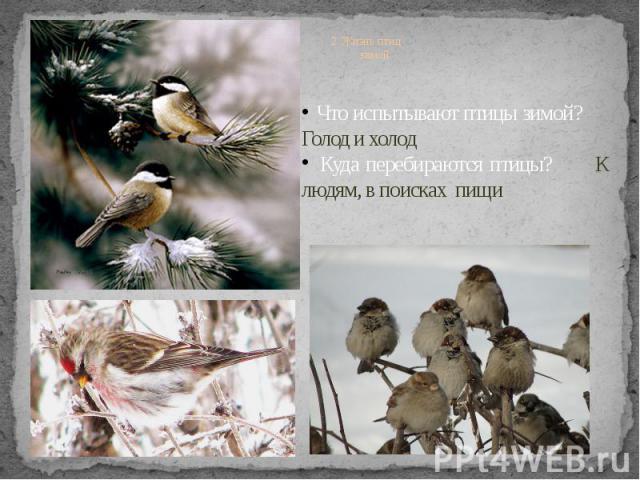 2. Жизнь птиц зимой Что испытывают птицы зимой? Голод и холод Куда перебираются птицы? К людям, в поисках пищи