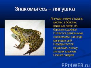 Знакомьтесь – лягушка Лягушки живут в сырых местах: в болотах, влажных лесах, по