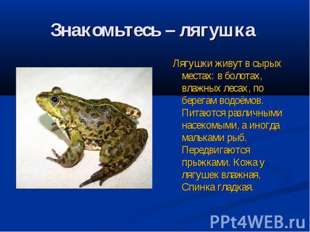 Знакомьтесь – лягушка Лягушки живут в сырых местах: в болотах, влажных лесах, по берегам водоёмов. Питаются различными насекомыми, а иногда мальками рыб. Передвигаются прыжками. Кожа у лягушек влажная, Спинка гладкая.