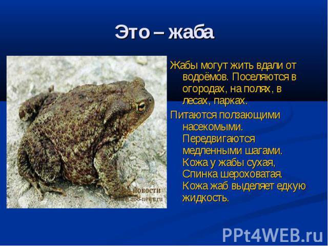 Это – жаба Жабы могут жить вдали от водоёмов. Поселяются в огородах, на полях, в лесах, парках.Питаются ползающими насекомыми. Передвигаются медленными шагами. Кожа у жабы сухая, Спинка шероховатая. Кожа жаб выделяет едкую жидкость.