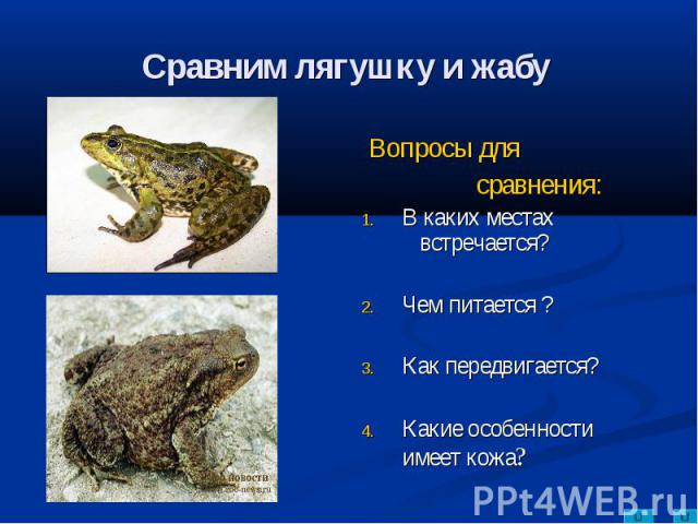 Сравним лягушку и жабу Вопросы для сравнения:В каких местах встречается?Чем питается ?Как передвигается?Какие особенности имеет кожа?