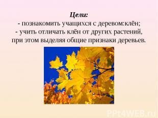 Цели:- познакомить учащихся с деревом:клён;- учить отличать клён от других расте