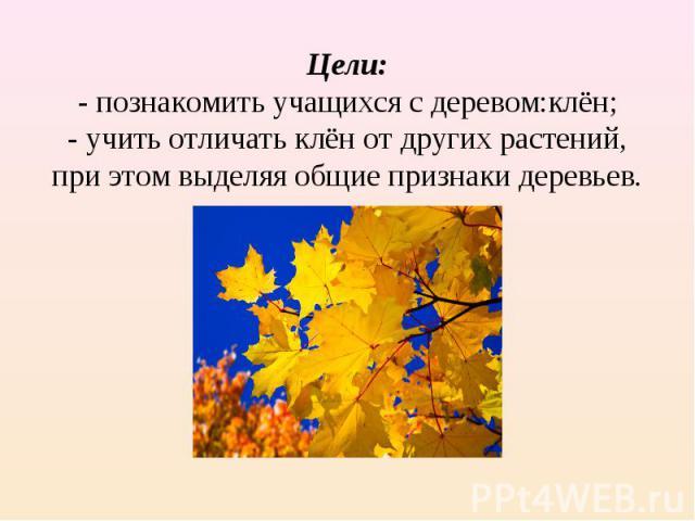 Цели:- познакомить учащихся с деревом:клён;- учить отличать клён от других растений, при этом выделяя общие признаки деревьев.