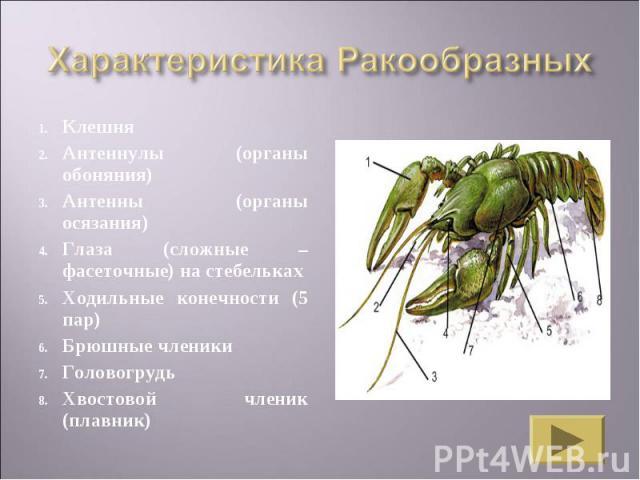 КлешняАнтеннулы (органы обоняния)Антенны (органы осязания)Глаза (сложные – фасеточные) на стебелькахХодильные конечности (5 пар)Брюшные членикиГоловогрудьХвостовой членик (плавник)