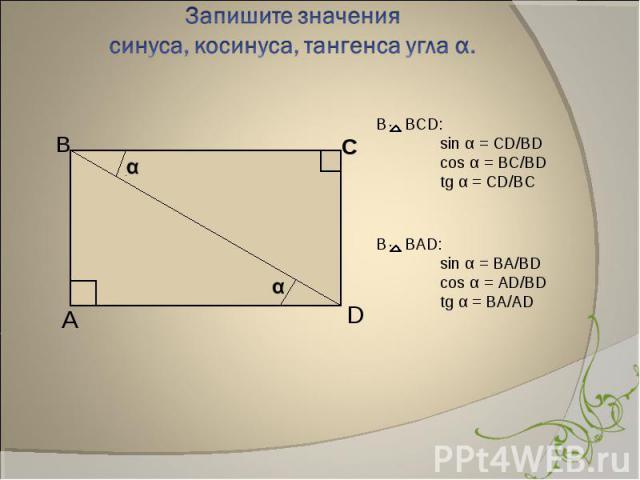 В BCD: sin α = CD/BDcos α = BC/BDtg α = CD/BC В BАD:sin α = BA/BDcos α = AD/BDtg α = BA/AD